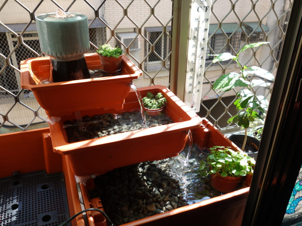 The final windowsill water garden!