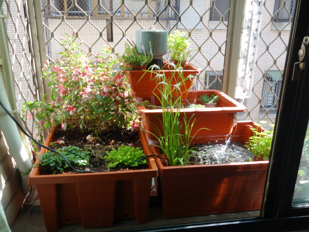 The final windowsill garden!