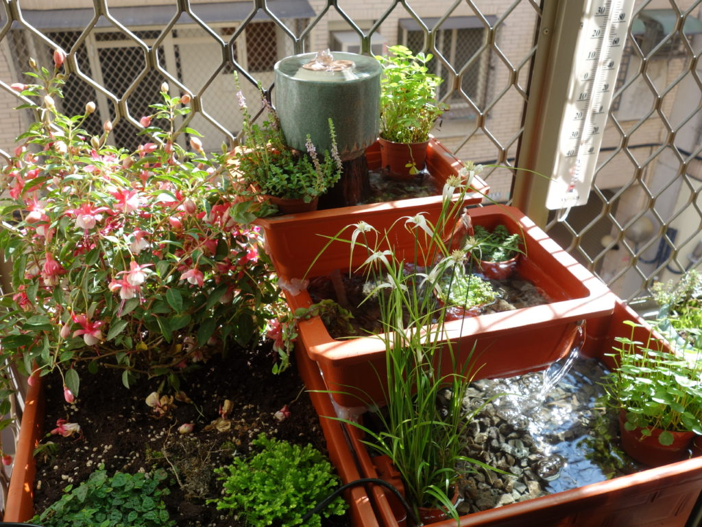 The fully-planted windowsill garden